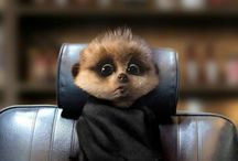 Baby Simples