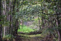 Nature's beauty by Sigma C 150-600mm / Zdjęcia przykładowe | sample images: Sigma C 150-600mm f5-6.3 lens