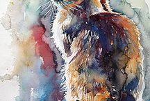 Gatti: i miei colori