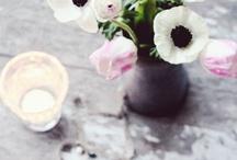 romantic  anemones