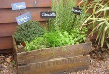 Jardin / Jardin future maison