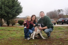 TLC Adoptions / Here are the recent dogs & cats that have found their forever homes.