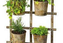 plantes i testos