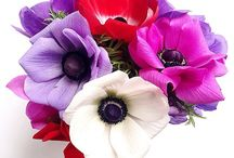 Images / Flowers