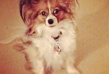 Dog training: Obedience/Rally/Agility