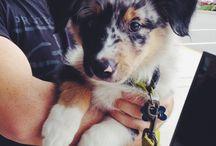 puppies&animals