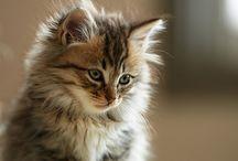 Cats Cats Cats !!