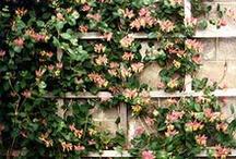 gardening / by Denise Marentette-Willey