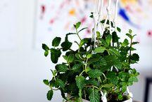 Plants & Garden:- DIY Pots & planters
