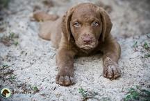 Puppy Love / by Meagan Holt