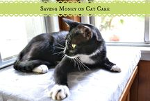 Saving Money on Cat Care / by CatTipper.com