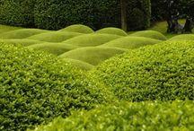 Topiária no jardim
