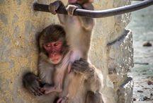 Monkeys / Monkeys