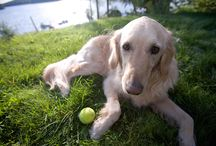 Dog-Safe Lawns & Gardens / Tips for creating a dog-safe lawn, landscaping, and garden. / by DogTipper.com