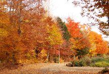 Décor d'automne / Chez Pépinière Villeneuve, l'automne est magique!