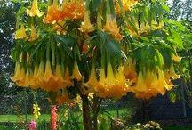 květina - flower