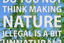 420 / by BURNS FORSYTHE