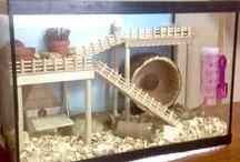 Hamsterquarium