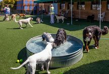 dog hotel ideas pet resort