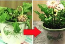 Adubos plantas