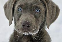 Cute Pets / by Carrie Janik Pfleger