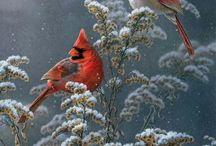 ptáci - birds