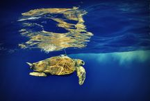 Mayotte / Fotografie ostrova Mayotte, který je součástí Komorského souostroví v Indickém oceánu. #Mayotte
