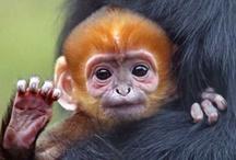 Cutest Baby Animal