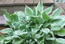 Növények szaporítása, gondozása