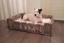 Hondenmanden en toebehoren / Al onze trouwe viervoeters hebben ook recht op een mooie meubel,in ons assortiment vind u leuke hondenmanden, voedertafels, mandkussens en benchkussens. Bezoek onze webshop www.yambee.nl voor meer leuke dier meubelen!