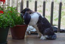 Voeding konijn
