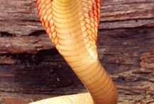 serpent