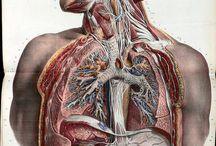 Medicine art