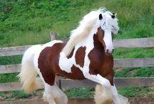 Powerful horses