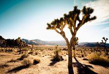 Piérdete por la California más salvaje: una ruta de paisajes naturales / En realidad se puede justificar una visita a este estado del suroeste estadounidense sólo para perseguir la fotografía perfecta y los paisajes naturales más conmovedores y hermosos. Piérdete por la California más salvaje...
