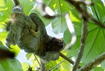 Wildlife TikiVillas Rainforest Lodge