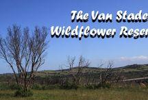 The Van Stadens Wildflower Reserve