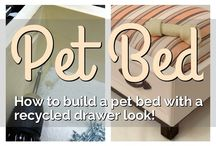 few things for dogs