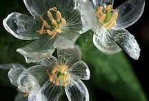 Цветы / Идеи для сада