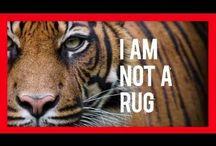Iam not a rug