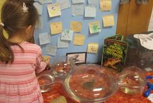 ECE - Emergent Curriculum and Inquiry-based Learning