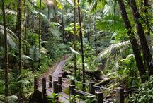 Lugares que quiero visitar... / Islands. Beaches. Forests. Lakes. Jungles. Pools.