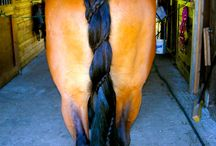 Horse Tail Ideas