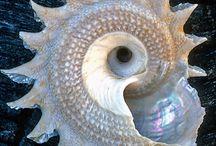 Shells / by Ana Giraldo
