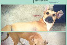 Adoptame / Ayudanos a encontrarles un #HOGAR. Comparte y Difunde. #Mexico #NuevoLeon #Adopta #PET Mas Info en: https://www.facebook.com/pages/Cultura-y-adopcion-animalista/267873646735634