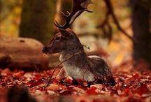 Natur: Faszination Welt