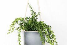 gardening & green things
