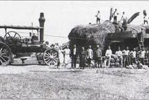Hungarian Steam - Threshing