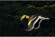Wildlife Photography / This part contains my photographs of wildlife - birds, mammals , insects etc