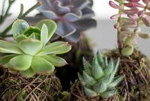 Succulent projects